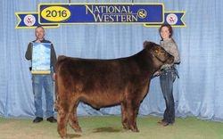 Grand Champion Crossbred Prospect Steer
