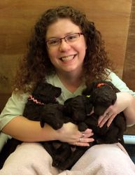 Armful of cute puppies!  18 days old.