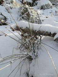 Vintermotiv 07.01.2011