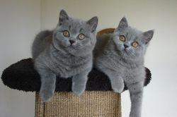 links Cassius en rechts Nina