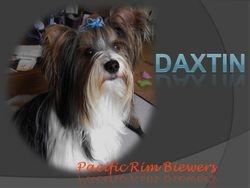 Daxtin