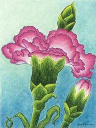Common Bounty - Carnation, Oil Pastel, 11x14, Original Sold