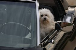 Nikos in his Daddy's Corvette