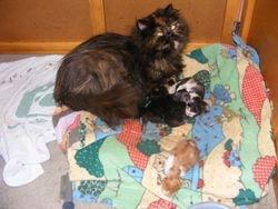 Teja's babies 2008