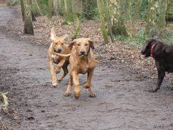 Jolene chasing Leo