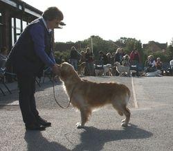 First - Graduate Dog
