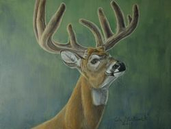 "Study of White-tailed Deer (9 by 12"" acrylic on gessoboard)"