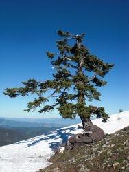 tree near the peak