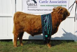 Reserve Grand Champion Bull LEA Niadh