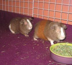 Tigger & Piglet