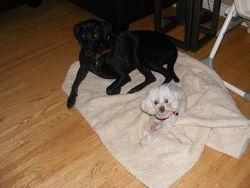 Dakota sharing her blanket with Frisco