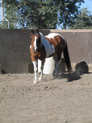 PLAYING GAMES IN THE ROUND PEN