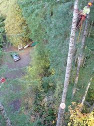 Large Doug-fir removals