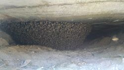 Bees under a container in Wickenburg