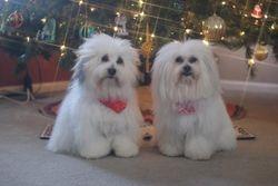 Tigg and Nikos Christmas 2011