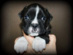 Laddy 4 weeks