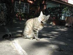Gatto rughe