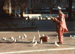 The Birdman in Christchurch Square 1985