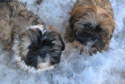 Angel and Freddie /Past Pups