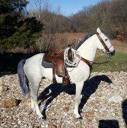 large Rio Rondo saddle set