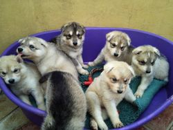 Shaman & Crystal Pups 2012