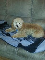 Dillinger relaxing @ home after his groom