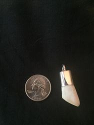 Buffalo tooth
