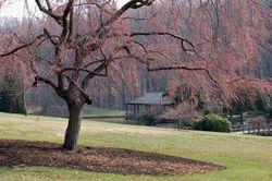 Teahouse, Spring