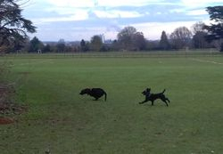 Playing chase with Tess at Hardwick Heath