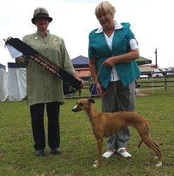 Ginger Best Open in Group (Hounds)
