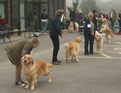 Limit Dog Placing