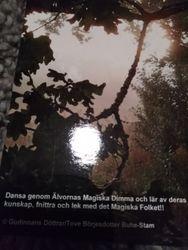 vykort/postcard Magic Mist