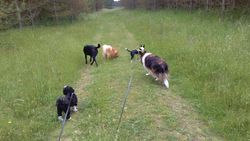 Joining Brodie & Henry, Pip and Benji at North Stow forest