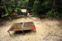 Ping pong table in rainforest camp