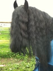 Werby hairy shot