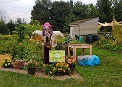 Scarecrow Ladies