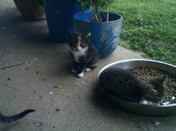 cats in the rescu