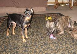 Peanut & Ellie