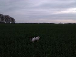 Frolicking in the field