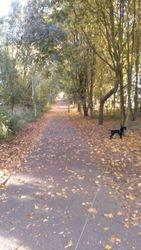 Walking through the Moreton Hall avenue