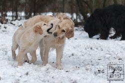 Guinevere met halfzusje Spirit in de sneeuw