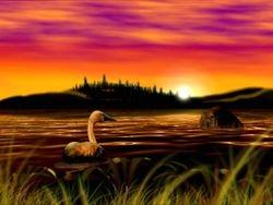 Swan (vs Tiger)