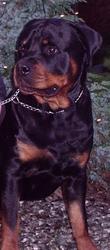 Brando Des. 2004