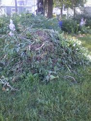 pile of weeds removed
