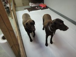 Kassey and Maggie check out the new space