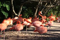Flamingos - Seaworld, Orlando FL