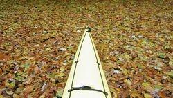 Paddling through leaves - Occoquan Creek