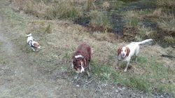 Pancho, Daisy and Peppie