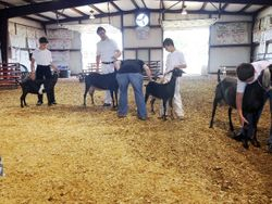 Sr. Showmanship at HOTODGA