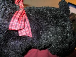 Body of Roosie the Scottish Terrier